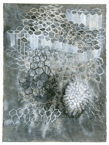 Paper Wasp Nests