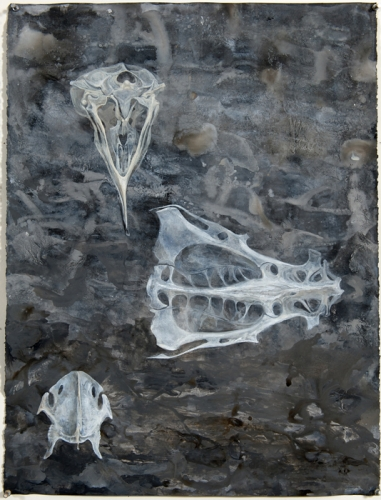 Cuckoo Skeleton
