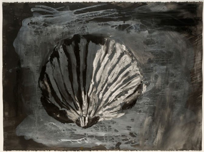 Shell in Shadow