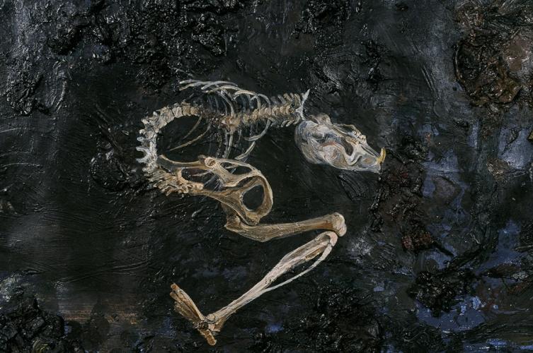 Rodent Skeleton (detail)